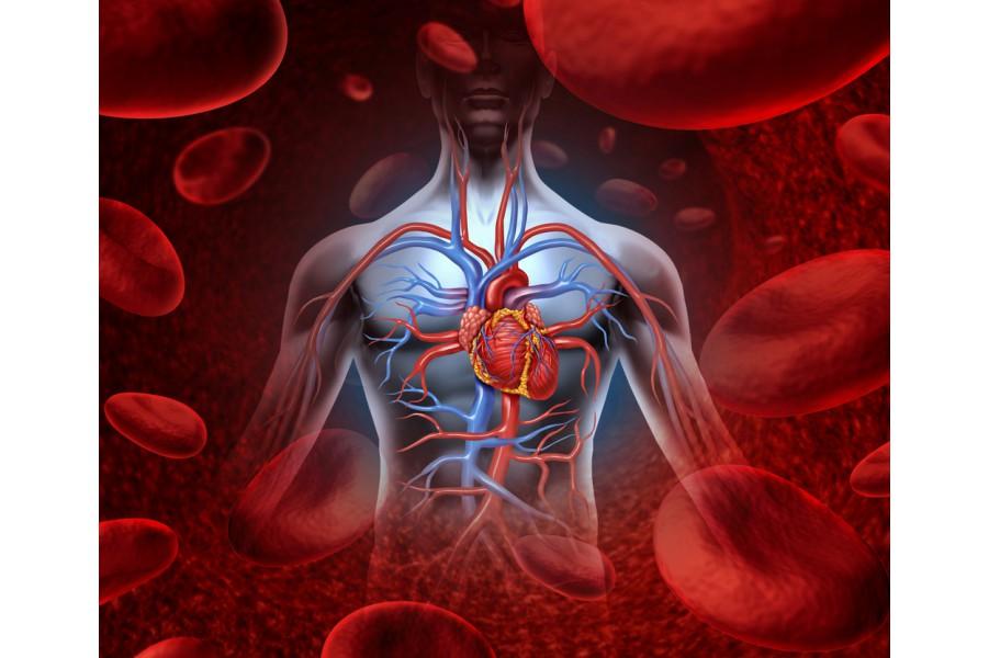 Những nguyên nhân làm nhịp tim đập nhanh, đập chậm và cách chữa theo KCYĐ
